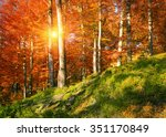 on the highland forests of the... | Shutterstock . vector #351170849