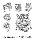 set of hand drawn tiger.  | Shutterstock .eps vector #351216620