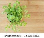 succulent plant  on wooden  | Shutterstock . vector #351316868