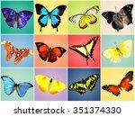 butterflies collection on... | Shutterstock . vector #351374330