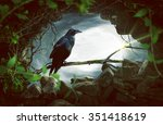 raven sitting on a branch | Shutterstock . vector #351418619