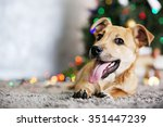 Small cute funny dog laying at carpet on Christmas tree background - stock photo