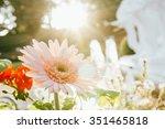 Beautiful Gerbera Flowers In...