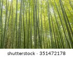 bamboo grove  bamboo forest at... | Shutterstock . vector #351472178