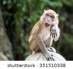 Macaque In Gombak  Malaysia