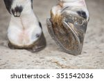 Detailed View Of Horse Foot...