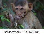 cute monkeys a cute monkey...   Shutterstock . vector #351696404