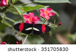 small postman  heliconius... | Shutterstock . vector #351705830