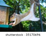 squirrel on feeder | Shutterstock . vector #35170696