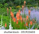 Kniphofia Uvaria Flower