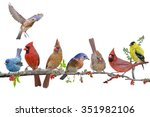 songbird celebration | Shutterstock . vector #351982106