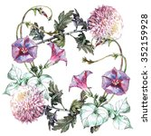 chrysanthemum  ipomoea flowers... | Shutterstock . vector #352159928