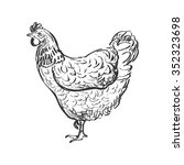 doodle hen  sketch illustration....   Shutterstock . vector #352323698
