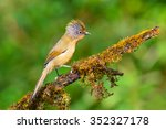 Small photo of Beautiful Spectacled Barwing bird (Actinodura ramsayi) perching on a branch