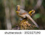 beautiful spectacled barwing... | Shutterstock . vector #352327190