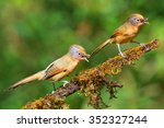 beautiful couple of spectacled... | Shutterstock . vector #352327244