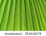 Palm Tree Leaf Closeup   Close...