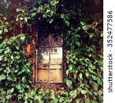 Shed Window And Ivy