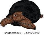 Stock vector illustration aldabra giant tortoise pet 352499249