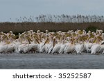 flock of pelicans in morning... | Shutterstock . vector #35252587