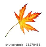 perfect autumn leaf over white | Shutterstock . vector #35270458