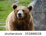 grizzly bear closeup | Shutterstock . vector #352888028