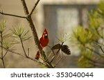 Beautiful Red Bird Sitting On...