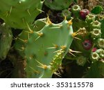 Thorny Plants Outdoors