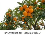 orange fruits on the tree with... | Shutterstock . vector #353134010
