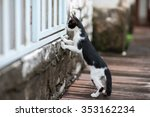 Curious Cat  A Cat Stand On Tw...
