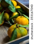 ripe tangerines with green... | Shutterstock . vector #353167040