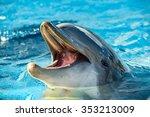 Common Dolphin Portrait While...