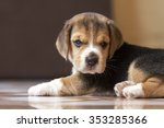 labrador dog | Shutterstock . vector #353285366