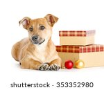 Small Funny Cute Dog With Gift...