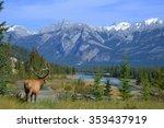 Elk in Jasper - stock photo