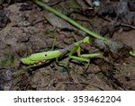 praying mantis  wildlife insect ... | Shutterstock . vector #353462204