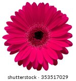 Pink Gerbera Flower Isolated O...