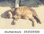 Fat Cat Lying On The Sidewalk...