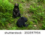 Two Sunbears Sitting On The...