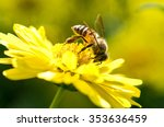 Photo Of A Beautiful Bee And...