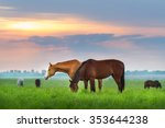 Horse Herd On Pasture At Sunrize