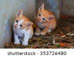 Stock photo cute kittens 353726480