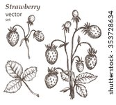 strawberry.  hand drawn... | Shutterstock .eps vector #353728634