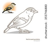 red browed pardalote bird learn ... | Shutterstock .eps vector #353746880