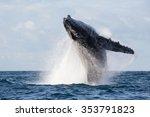Humpback Whale Jump. Madagasca...
