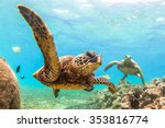Hawaiian Green Sea Turtle...