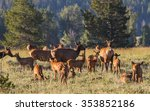 a herd of mother elk with... | Shutterstock . vector #353852186