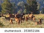 a herd of mother elk with... | Shutterstock . vector #353852186