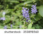 Small photo of Purple, five petaled wildflower,Tall Bellflower (American Bellflower), grows in the glade of a mid-western United States of America forest.