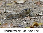 indian palm squirrel ... | Shutterstock . vector #353955320